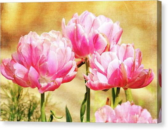 A Bouquet Of Tulips Canvas Print