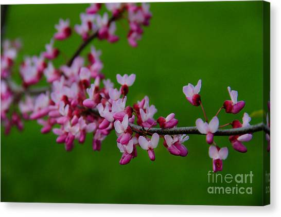 A Branch Of Spring Canvas Print