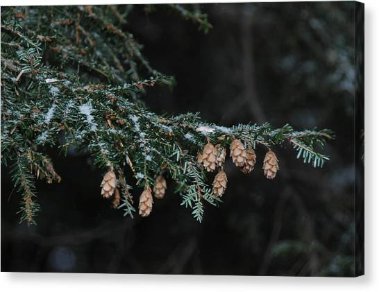 A Branch's Treasure Canvas Print by See Me Beautiful Photography