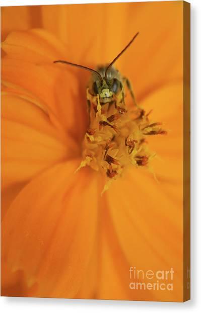 A Bugs Life Canvas Print