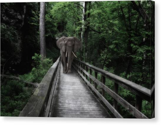 Ears Canvas Print - A Bull On The Boardwalk by Tom Mc Nemar