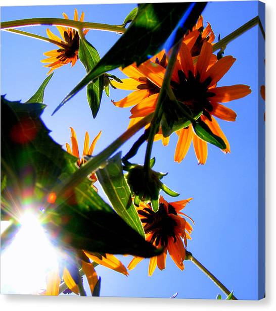 A Burst Of Sunshine Canvas Print by Sherwanda Irvin
