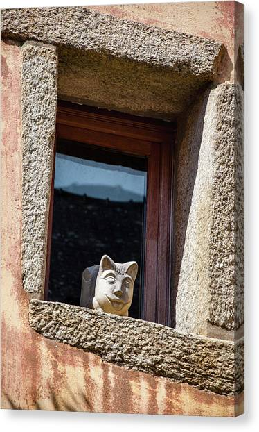 A Cat On Hot Bricks Canvas Print