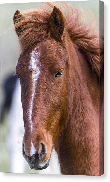 A Chestnut Horse Portrait Canvas Print