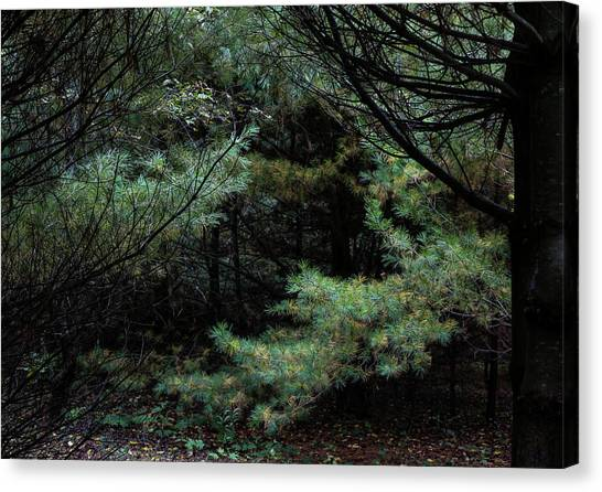 A Clearing In The Wild Canvas Print