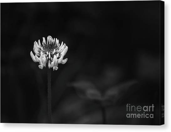 Clover Canvas Print - A Clover Flower by Masako Metz
