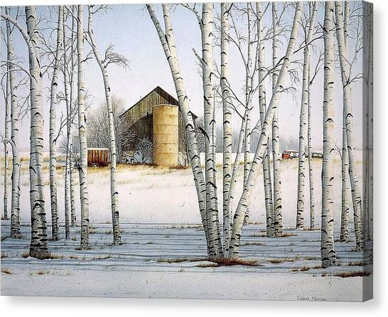 A Cluster Of Birch Canvas Print by Conrad Mieschke