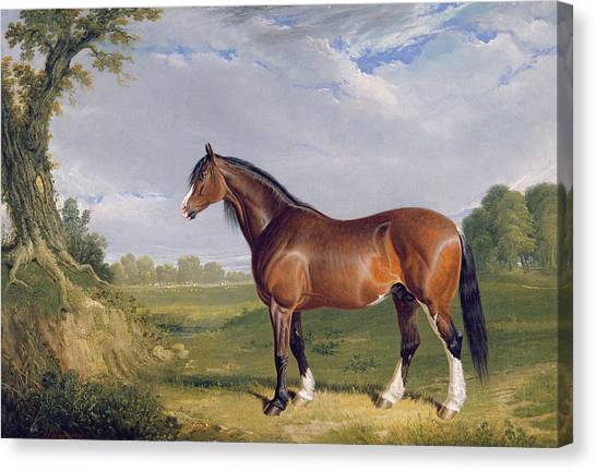 Draft Horses Canvas Print - A Clydesdale Stallion by John Frederick Herring Snr