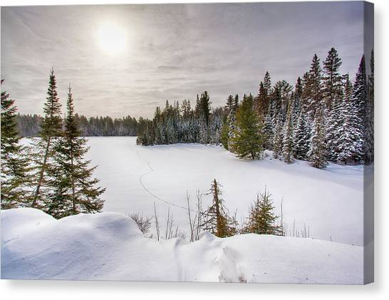 A Cold Algonquin Winters Days  Canvas Print