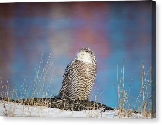 A Colorful Snowy Owl Canvas Print