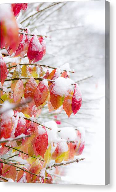 Orange Tree Canvas Print - A Colorful Winter by Tracey Rees
