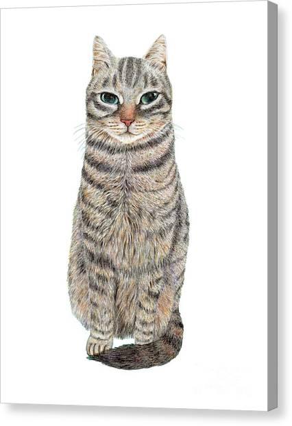 A Cool Tabby Canvas Print