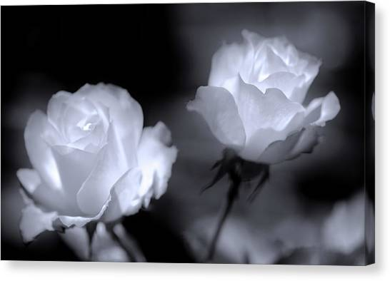 Canvas Print - A Couple Of Cool Roses by Daniel Furon