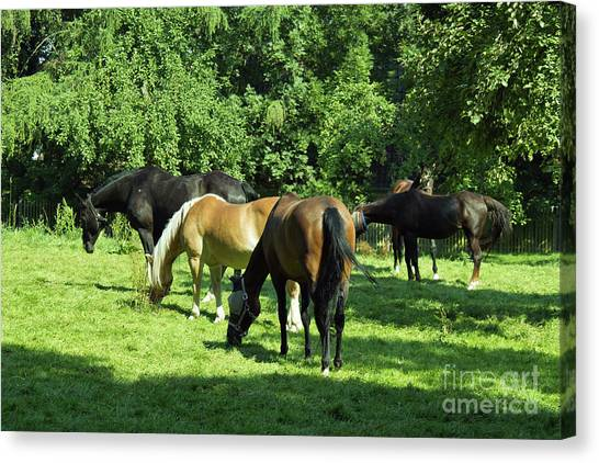 A Couple Of Horses Canvas Print by Pit Hermann