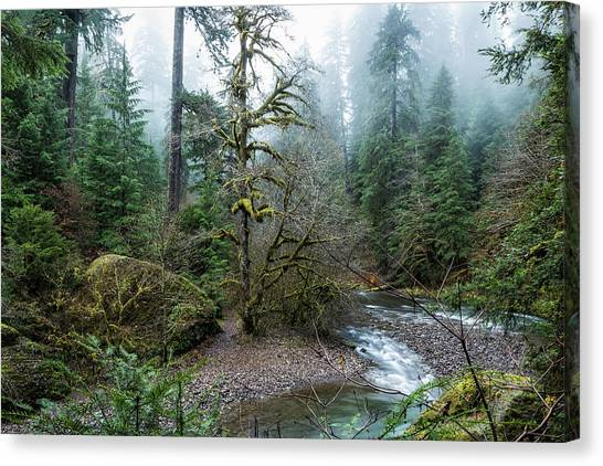 Canvas Print featuring the photograph A Creek Runs Through It by Belinda Greb