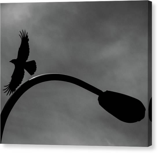 A Crow And A Streetlight Canvas Print