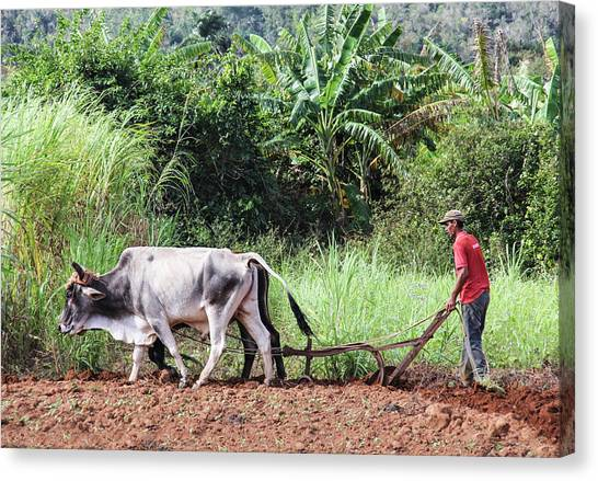 A Cuban Tractor Canvas Print