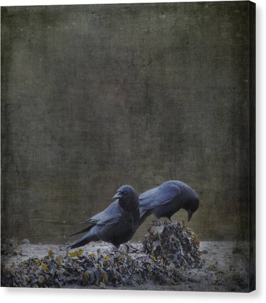 Blackbirds At The Beach Canvas Print