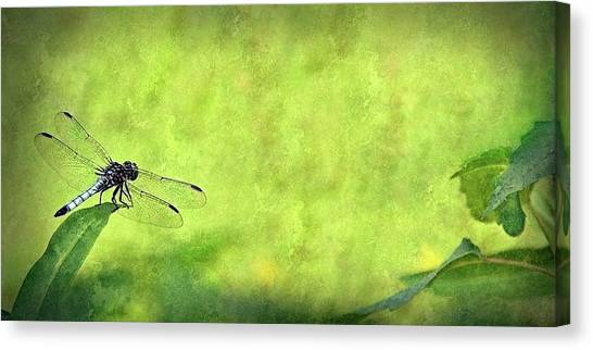 A Day In The Swamp Canvas Print