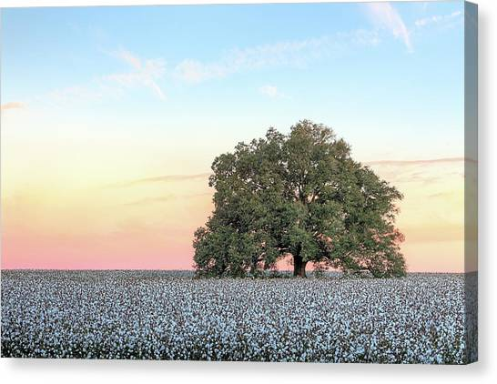 A Deeply Southern Sunrise Canvas Print