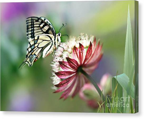 A Delicate Touch Canvas Print