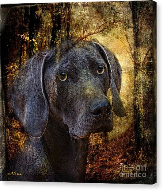 A Dogs Tale Canvas Print