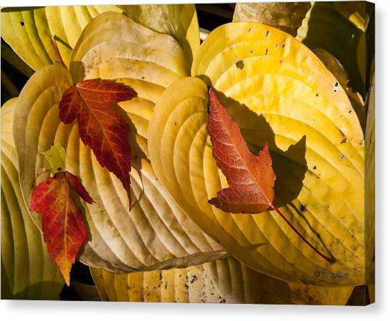 A Fall Contrast Canvas Print