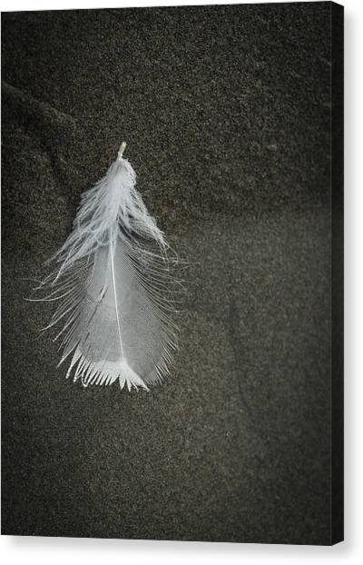 A Feather At The Edge Of The Water Canvas Print