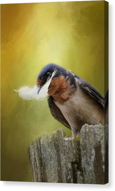 A Feather For Her Nest Canvas Print