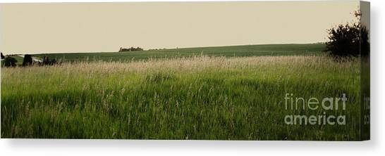 Canvas Print featuring the photograph A Field Of Grass by Sandy Adams