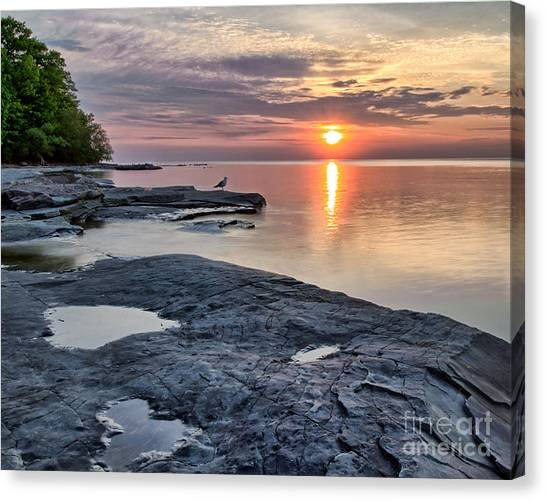 A Flat Rock Sunset With Seagull Canvas Print