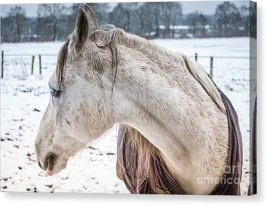 A Girlfriend Of The Horse Amigo Canvas Print