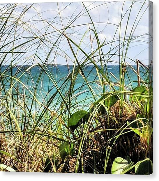 Seagrass Canvas Print - A Gorgeous Winter Day For A Bike Ride by Rg Field