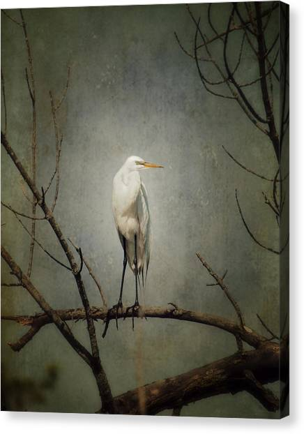 A Great Egret Canvas Print