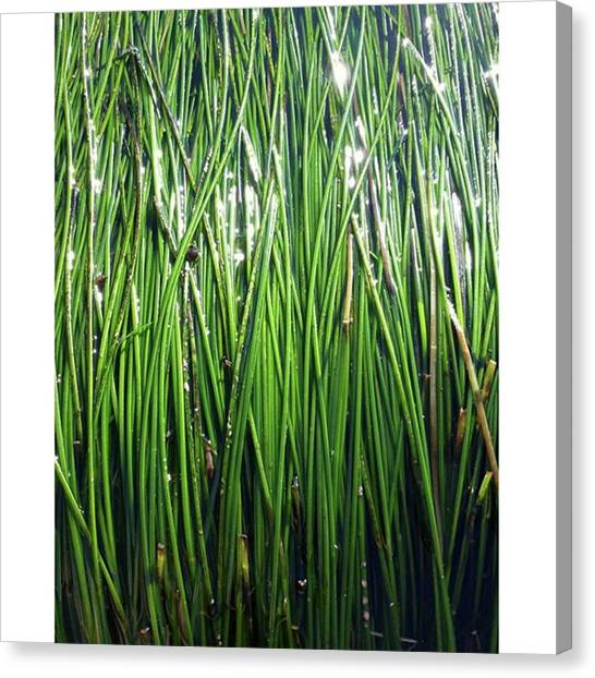 Seagrass Canvas Print - A Green Wall Of Glinting Sea by The Texturologist