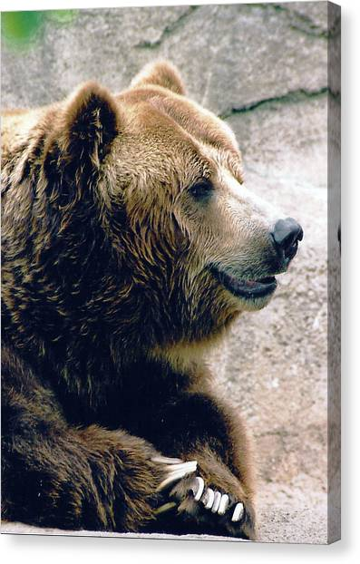 A Grizzly Grin Canvas Print