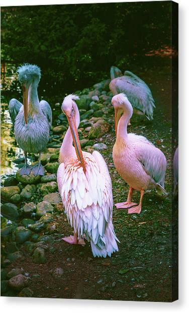 a group of swans near the pond on a Sunny summer day Canvas Print