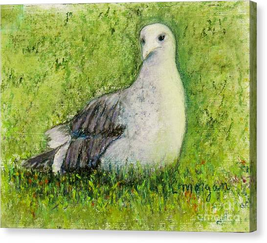 A Gull On The Grass Canvas Print