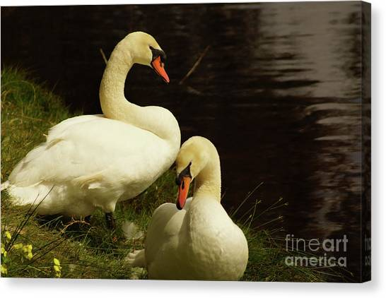 A Handsome Pair Canvas Print