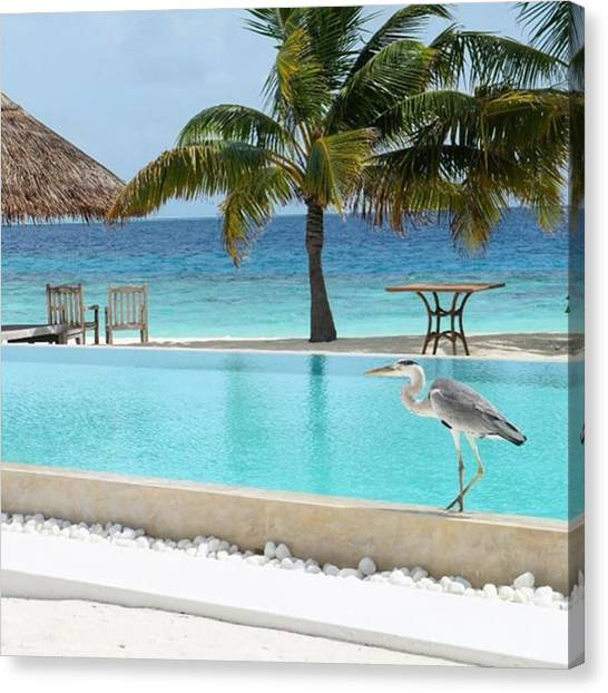 Herons Canvas Print - A Heron In Cocoa-island #resort by Eiji Ide