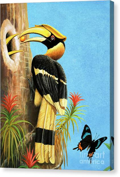 Hornbill Canvas Print - A Hornbill by RB Davis