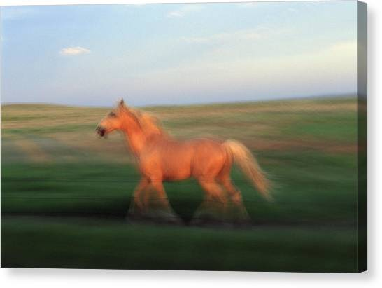 Prairie Sunsets Canvas Print - A Horse At Sandal Ranch Near Howes by Joel Sartore