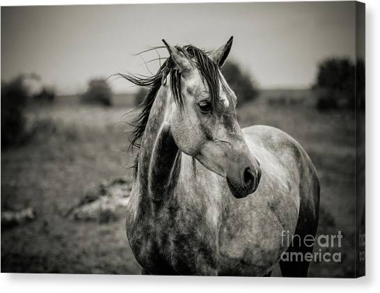 A Horse In Profile In Black And White Canvas Print