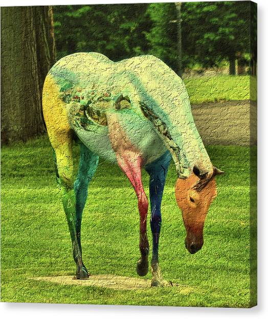 A Horse Is A Horse Canvas Print