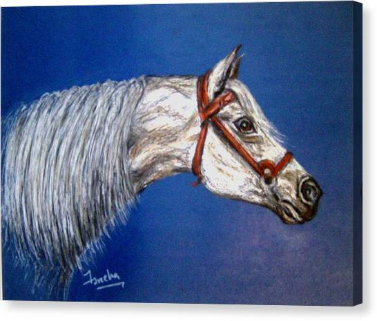 A Horse With No Name Canvas Print by Fareeha Khawaja