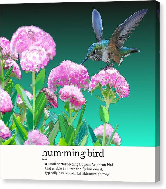 A Hummingbird Visits Canvas Print