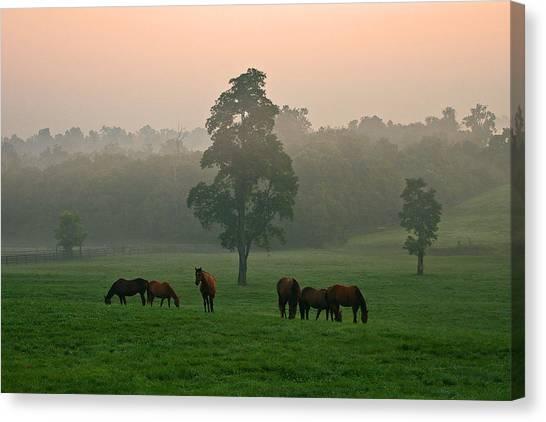 A Kentucky Morning. Canvas Print by Ulrich Burkhalter