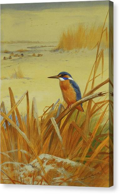 Kingfisher Canvas Print - A Kingfisher Amongst Reeds In Winter by Archibald Thorburn
