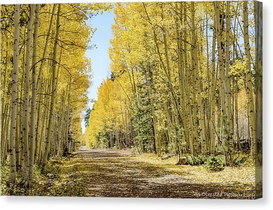 A Lane Of Gold Canvas Print