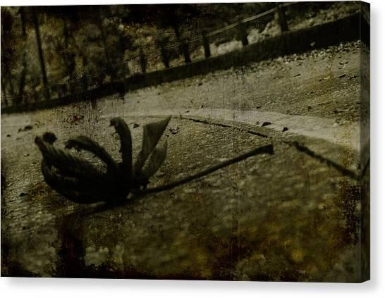 A Leaf By The Way Canvas Print by Valmir Ribeiro